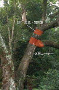 折れた枝。  赤い部分が寄贈された部分。